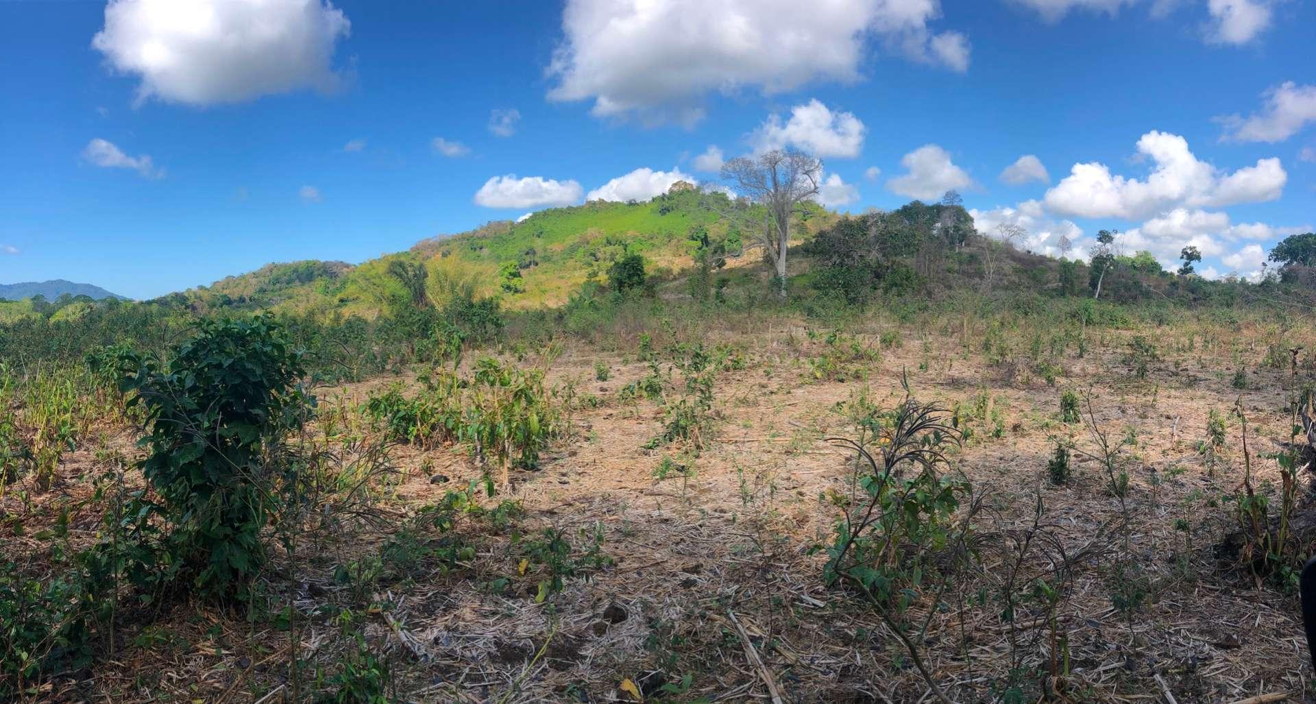 A vendre grands terrains ideal pour investisseur