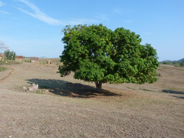 A vendre,cession de droit d'occupation d'un terrain à Belazalaza