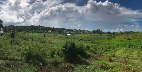 Un joli terrain à vendre à Ambondrona