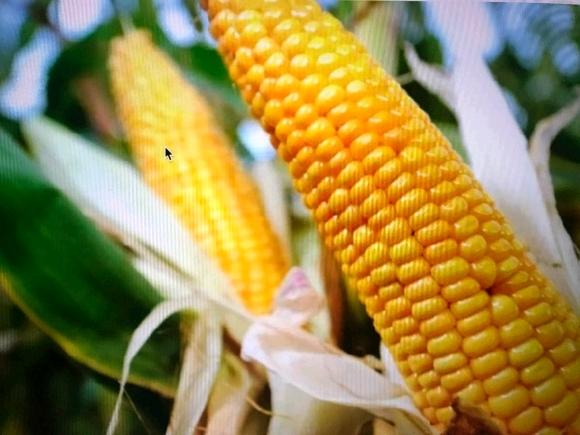 Terrain de 13 761 ha  pour exploitation agricole à Antsohihy