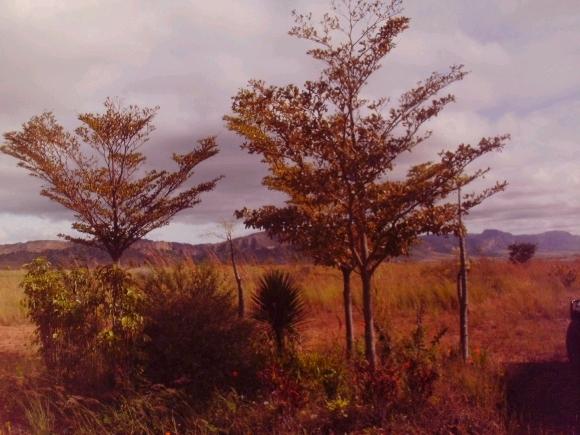 Terrain de 3 Ha avec une belle vue à Isalo