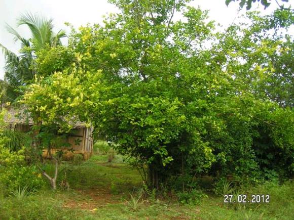 A vendre, terrain à vendre à Antafiambotry (Ambanja)