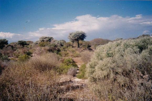 Terrain pour projet hôtelier ou immobilier à Tuléar